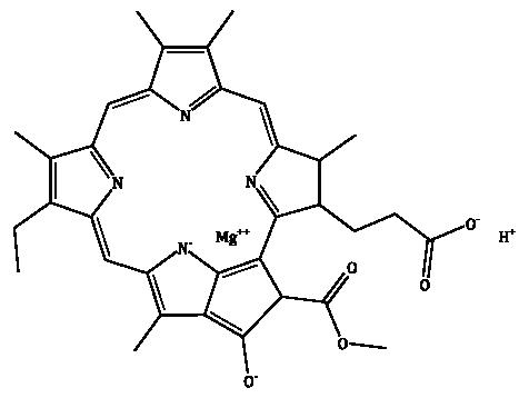 Chlorophyllide a